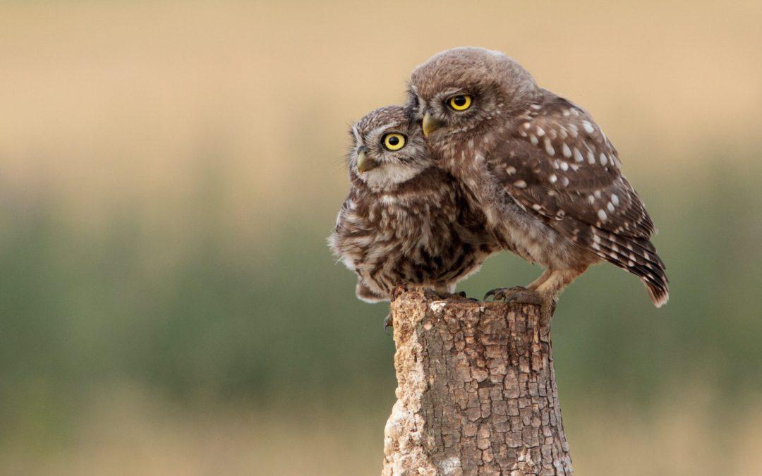 Update Vogelschutzsperrungen 2021