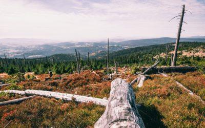 Sanierungen im Bayerischen Wald